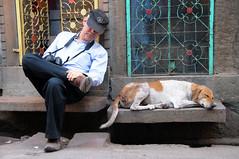 Let sleeping dogs lie (Irene Stylianou) Tags: street sleeping dog india expedition digital nikon photographer sleep streetphotography workshop nikkor dslr straydog nikondigital vr rajasthan nationalgeographic jodhpur stevemccurry d300 sleepingdog nikoncamera travelphotography 18200mm letsleepingdogslie vr2 nikkor18200mm photographyworkshop aplaceforportraits nikond300 nationalgeographicphotographer irenestylianou stevemccurryexpedition nikkorzoomlens18200mmf3556 indiaexpedition