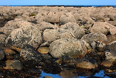Barnacle Bed (Gaz-zee-boh) Tags: ireland sea west stone seaside rocks atlantic shore seashore atlanticocean barnacle 5photosaday liscannorbay
