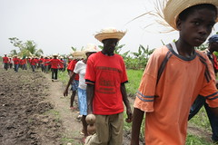 planting trees mpp  anti-monsanto demo haiti (teqmin) Tags: trees usaid haiti corn farmers rally mpp planting monsanto haitianpeasants gmofreeworld usforeignaid tminskyixnetcomcom antimonstanto foodsoverignty