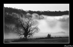 manteau de brume (francky25) Tags: noir et blanc brume doubs comt franche passiondclic ivrey