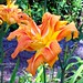 Lilly Day Photo 6