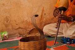 Snake charmer by Avinash Menon, on Flickr