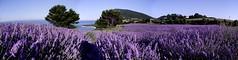 Conero lavander perfume! (raffaphoto) Tags: italy perfume lavander conero marche rivieradelconero
