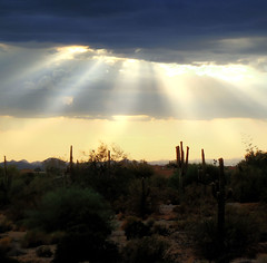 Sun-Rays Mayhem (Olivia Foley) Tags: trees roof sunset arizona sky orange plants rain clouds cacti sand backyard colorful wildlife az wash stuff rays thewash saurgo