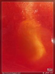 Coeur de tomate ... Tomato heart ... Tomatenherz ... Corazn de tomate ... Cuore di pomodoro ...   (Rached MILADI - ) Tags: macro beautiful tunisia tunis coeur textures couleur tunisie lgume artistique    dcr250 raynox  rached   dcr250raynox fz38 fz35 dmcfz38 httpmirwartblogspotcom