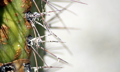 Kaktusimpressionen