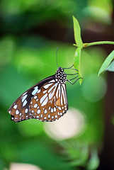 Butterfly World June 2010