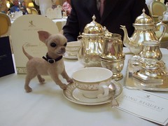 dargeeling for me (Gai Button) Tags: england dog london felted puppy miniature afternoon tea handmade needle ritz chiahuahua
