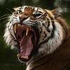 Big Cat...Big Teeth! (Samantha Nicol Art Photography) Tags: animal cat square fur big scary nikon teeth tiger samantha nicol