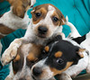 Hunde - 46 (Manfred Lentz) Tags: pets dogs puppies pubs hunde littledogs welpen hündchen babydogs whelps