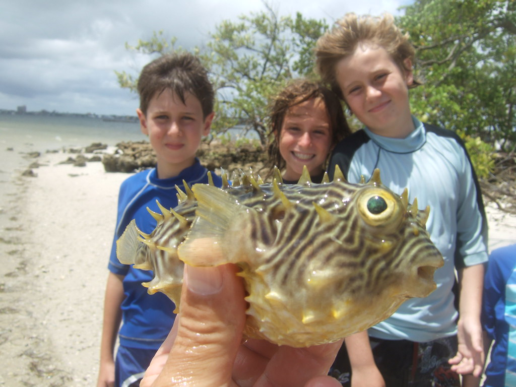 Jacob, Harper, William and striped burrfish