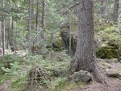 Area towards mine off of Tubal Cain trail.