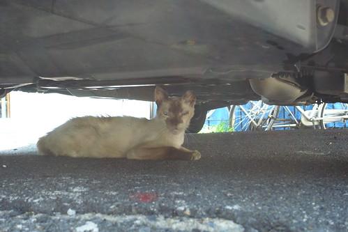 Today's Cat@2010-07-22