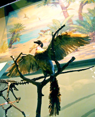 (Linden Tea) Tags: chicago bird birds museum painting model mural dinosaur fieldmuseum dinosaurs palaeontology archaeopteryx charlesknight