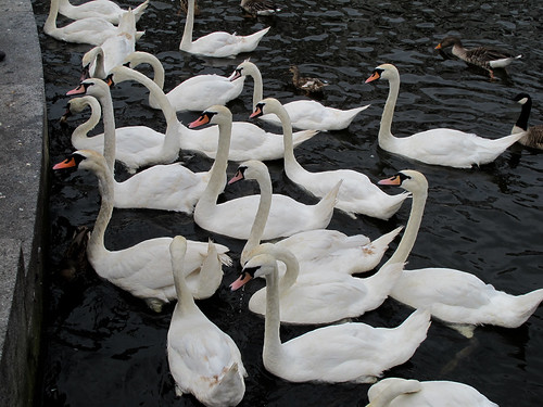 An Army of Swans - Hamburg, Germany