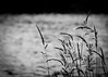 Serenity (Dav1dfv) Tags: bw water grass iso 100 ef100mmf28macrousm canoneos500d 11250secatf40