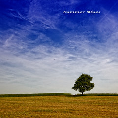 If you think in terms of a year, plant a seed; if in terms of ten years, plant trees; if in terms of 100 years, teach the people. (Quote by Confucius) (Sashs Kitchen-Studio Photography) Tags: blue sky tree field germany hessen sascha rhn hesse rueb rb allrightsreservedsascharueb sashskitchenstudiophotography
