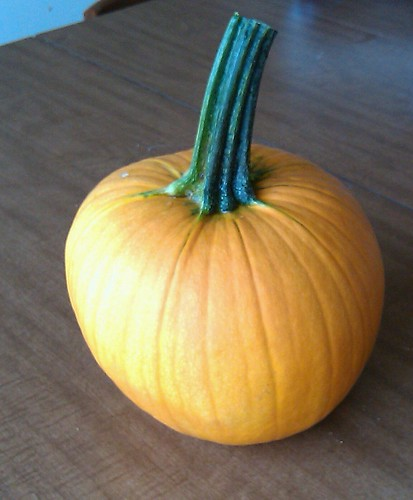 Volunteer pumpkin!
