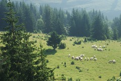 He maketh me to lie down in green pastures (kosova cajun) Tags: landscape highlands sheep pasture kosova kosovo dele kosov rugova peisazh bog rugov bjeshktenemuna accursedmountains bjeshk albanianalps alpetshqiptare psalm23series