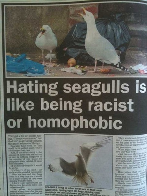hating seagulls
