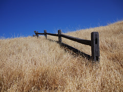 fence in grass