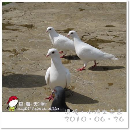 清境小瑞士花園42-2010.06.26