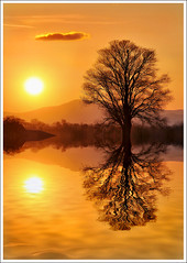 The little cloud (Jean-Michel Priaux) Tags: light sunset shadow orange sun france tree art nature water silhouette illustration landscape nikon shadows lumière ombre reflet reflect alsace outline shape paysage arbre masterpiece inondation anotherworld ried d90 priaux vanagram