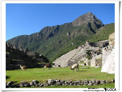 Machu PicchuIMG_0534.jpg