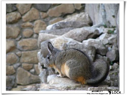 Machu PicchuIMG_0732.jpg