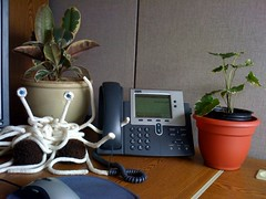 plants for my cube: rubber plant & aralia