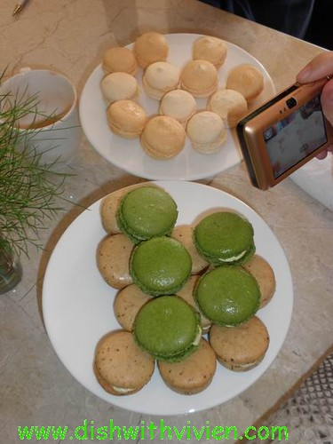 macaron-for-tasting
