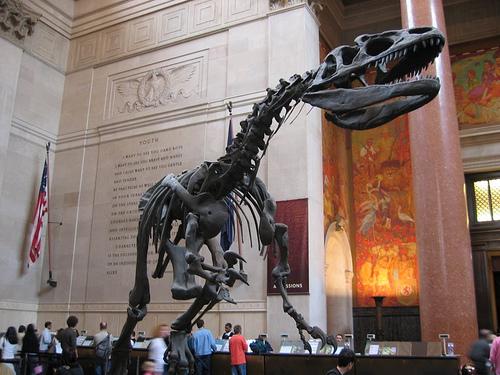 Museu de História Natural - reprodução