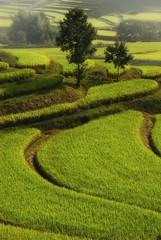 Asuka Village * (HarQ Photography) Tags: green beauty japan nara ricefield asukavillage bestcapturesaoi elitegalleryaoi