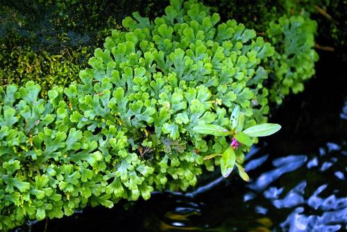 庭の苔-2