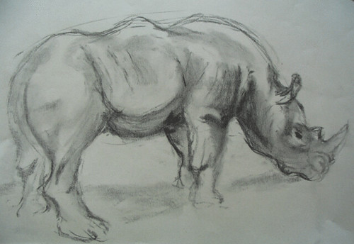 Rhino; charcoal drawing