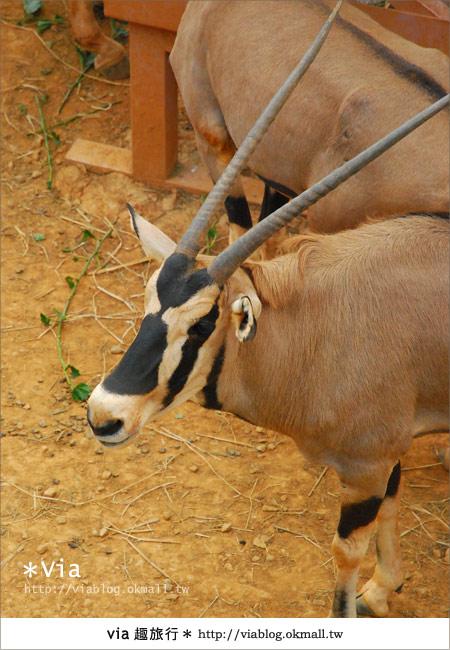 【新竹住宿】來去和動物住一晚~關西六福莊生態渡假旅館16