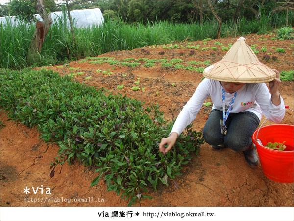 【關西六福莊】精彩秘探野生動物園/DIY手作/農趣樂~!3