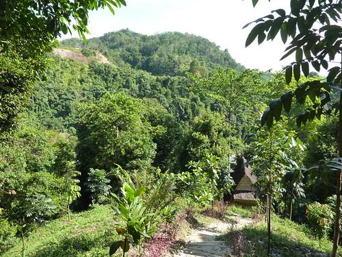 Bukit Lawang - Trek (2)