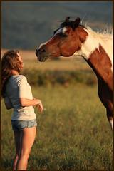 Instructions (sagetopaz) Tags: horses horse oregon cheval cloverdale equine nationalshowhorse cheveaux