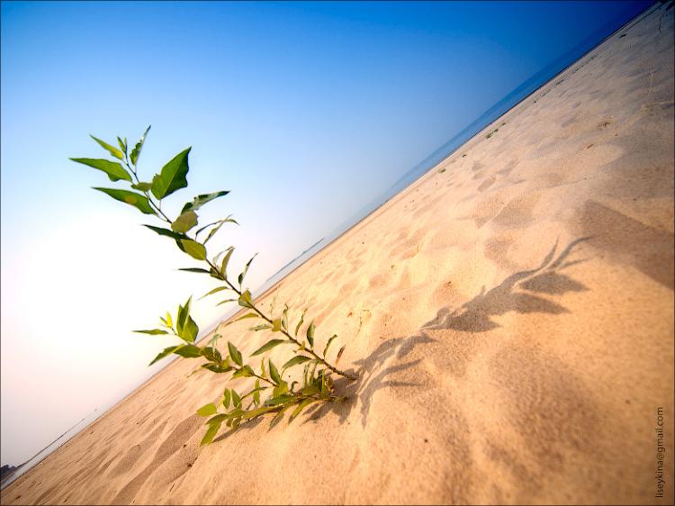 Песчаная коса рядом с Хрящевкой