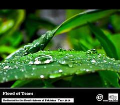 Flood of Tears [Dedicated to the flood victims of Pakistan -Year 2010] (Ahmed Zoha (Away)) Tags: rain drops tears help devistation year2010 floodpakistan