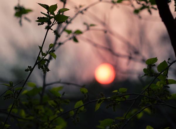 apple_sun