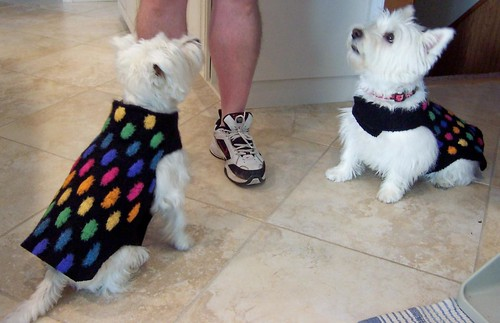 Felted Westie Sweaters