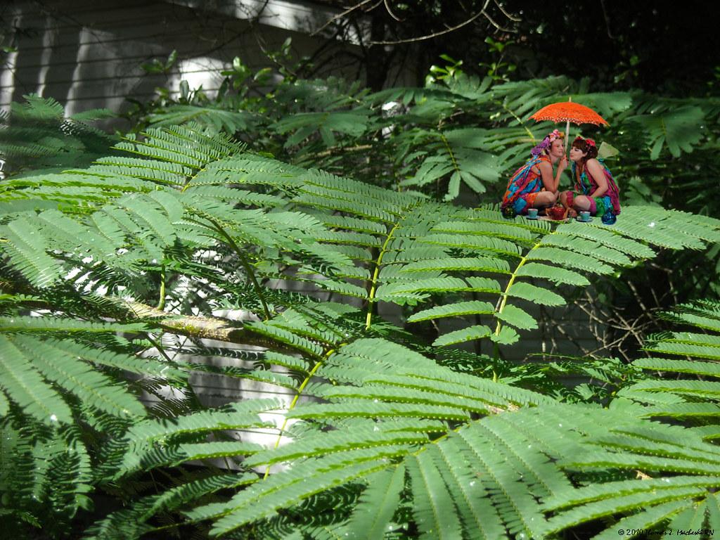 Summer Fae Take Tea & Gossip On Mimosa