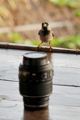 Photography for all .. ;)