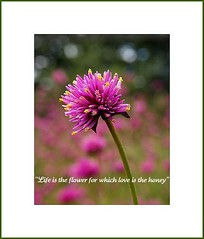 Happy Friday My Friends~ (Piscesgirl2~) Tags: life pink summer ontario canada flower love nature beautiful garden poster words quote summertime blueribbonwinner bej theperfectpinkdiamond