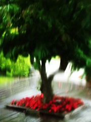 CHH25283 (Thursday'sChild) Tags: red blur home rouge nikon flou