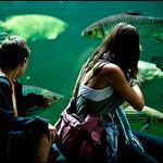"Mira quins peixos... <a style=""margin-left:10px; font-size:0.8em;"" href=""http://www.flickr.com/photos/8765767@N07/4933115380/"" target=""_blank"">@flickr</a>"