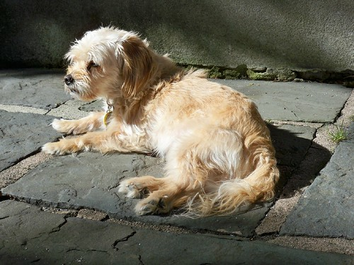 Maisy in the Sun