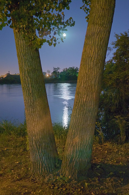 Night view of the Missouri River, in Saint Charles, Missouri, USA - moonrise between trees